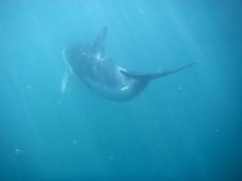 Dolphin_swimming1_2