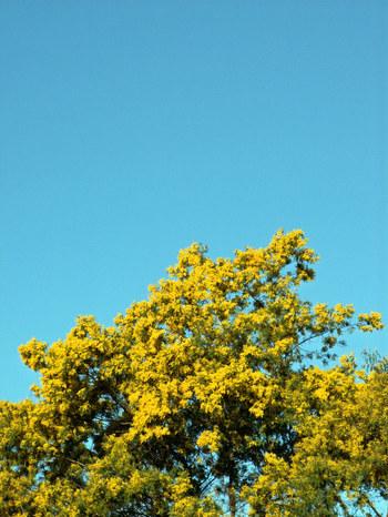 Spring_has_come_22