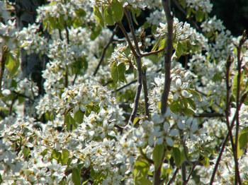 Spring_has_come_27